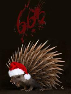hedgehog666's Profile Picture