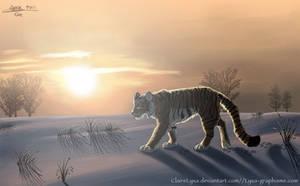 Siberian tiger by ClaireLyxa