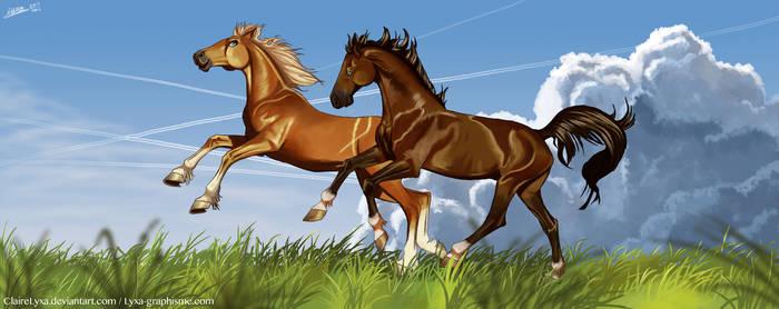 Gallop in the field