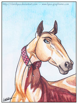 Behoka - proud akhal teke horse