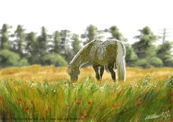 Plumeau in meadow