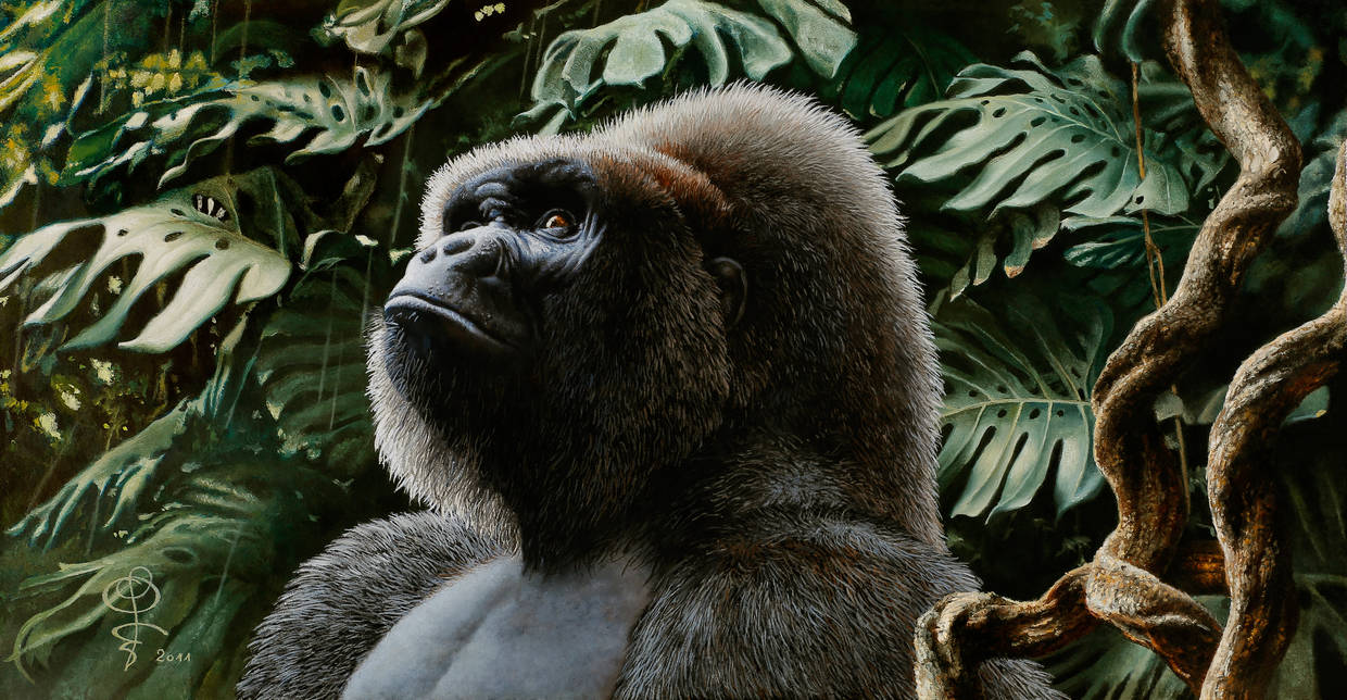 The dream of the gorilla by Dom2691