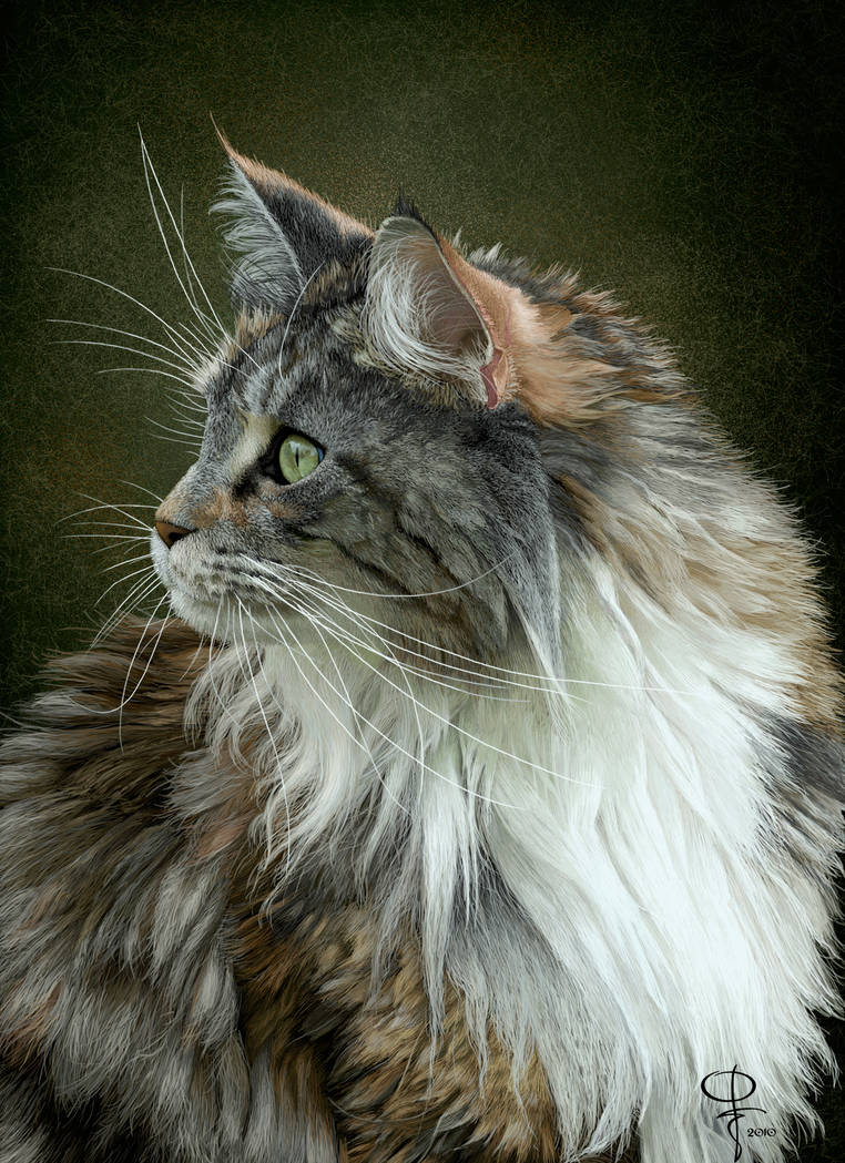 Maine Coon by Dom2691