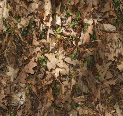Forest Floor Texture! by BriskWinds Dark Forest Floor Texture