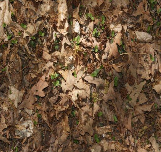 forest floor texture seamless. forest floor texture by briskwinds seamless t