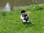Beauty Duck