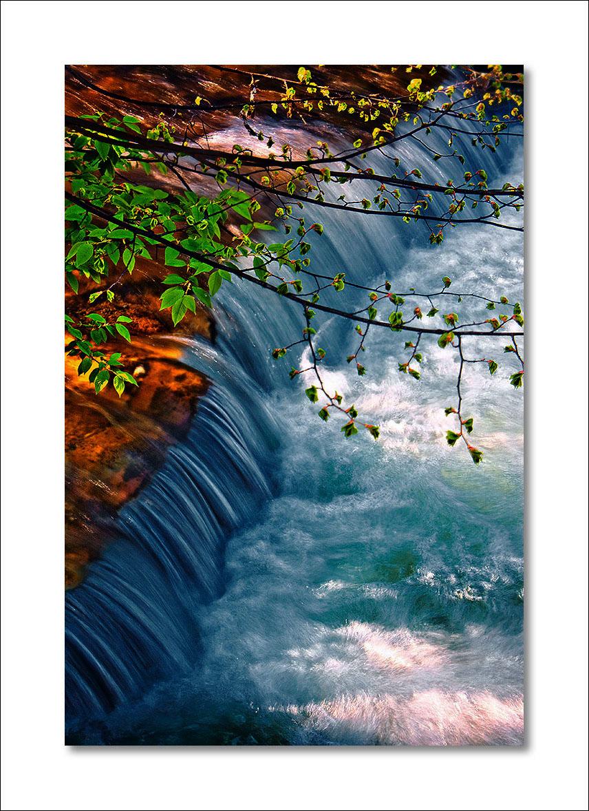 Avalon's gardens - Page 2 545b05d789ea25e64698d3aa2b54ad7b