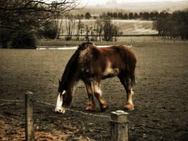 Horse by diaji