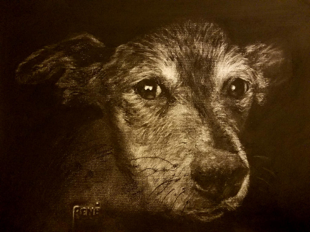 'Gracie' - Charcoal on laid paper - 9x12 by FuzzyMonkeyMan