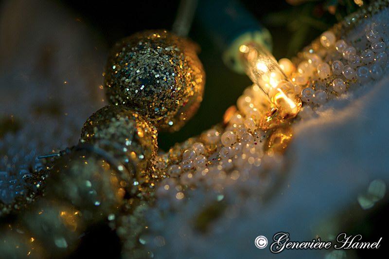 Sparkles by GeHamelPhotographe