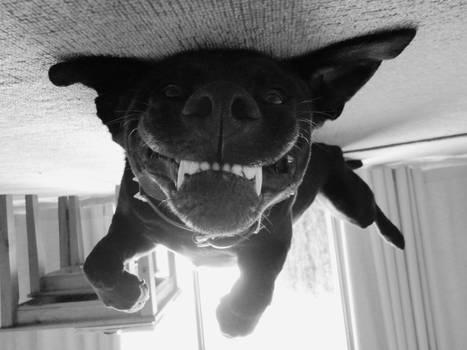 Mojo's Gremlin face!