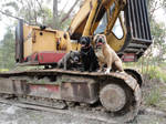 junk yard dogs