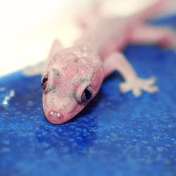 gecko by RobbyP