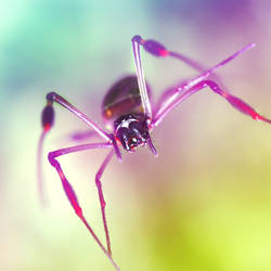 arachnido by RobbyP