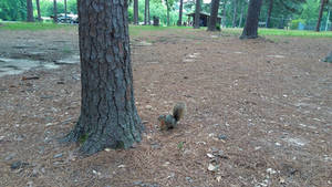 Curious Squirrely