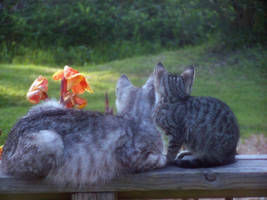 Kitty and Kitteh by BLUEamnesiac