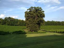 Vineyard 1 by BLUEamnesiac