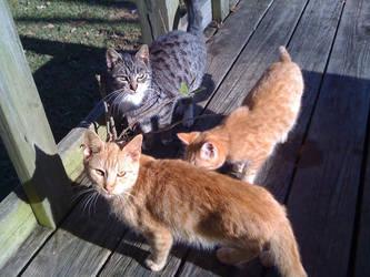 Three Little Kitties by BLUEamnesiac