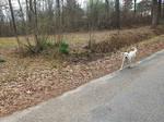 Run Along Little Doggy