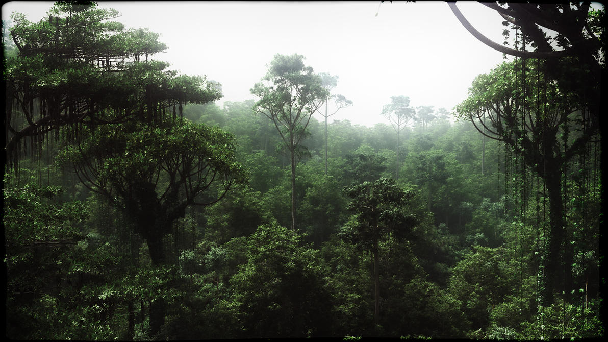 Rainforest Conopy by Andywong75