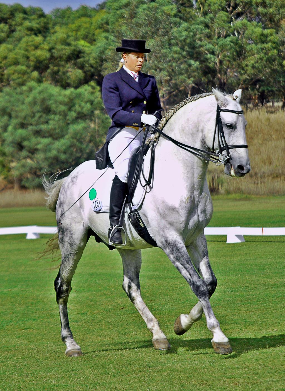 PRE Stallion by EquusAustralia