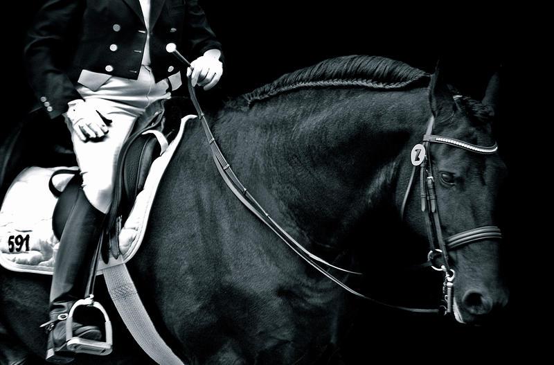 0193 by EquusAustralia
