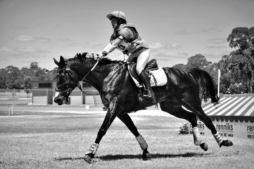 Homeward Bound by EquusAustralia