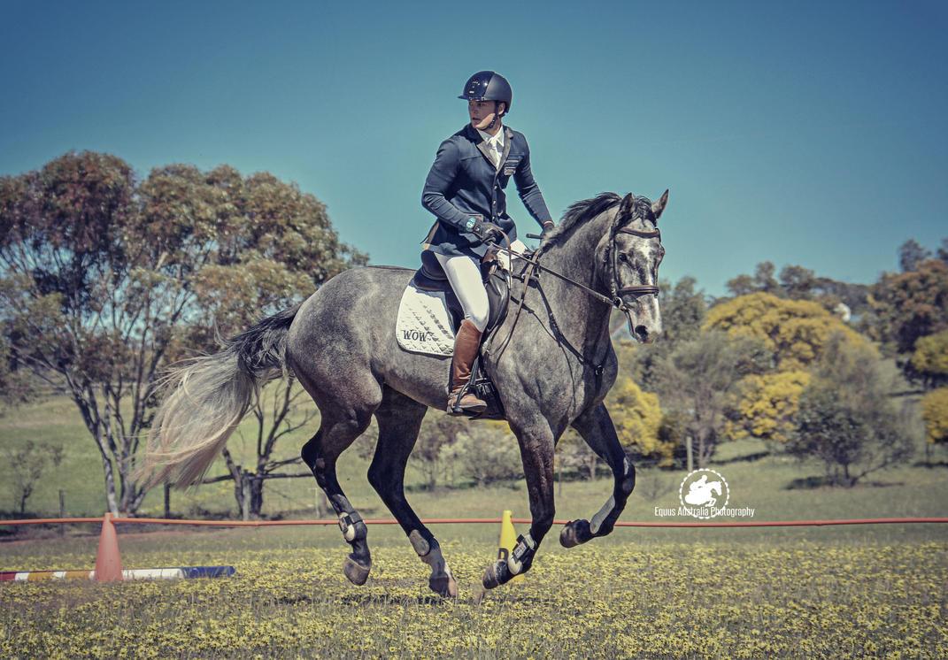 Monarto HT by EquusAustralia