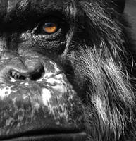 Portrait: Monkey by 99DEEPBLACK