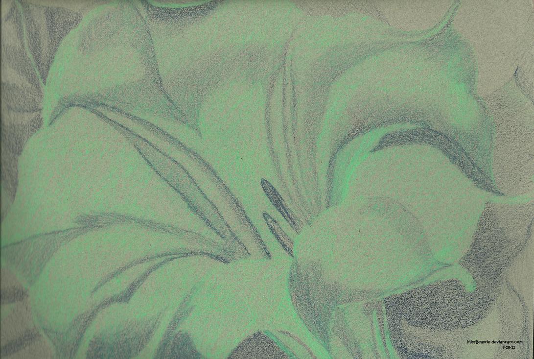 Color Study Georgia Okeeffe White Trumpet Flower By Missbeastie On