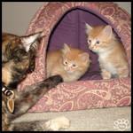 Grand Kittens 16