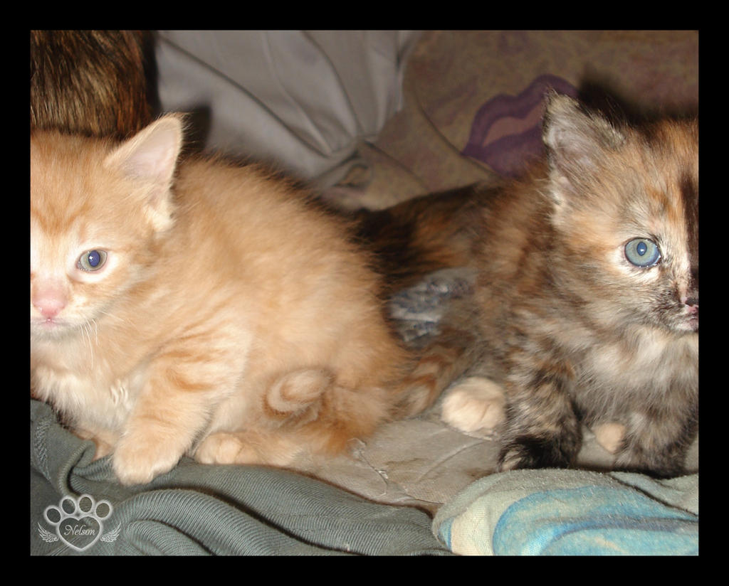 2009 Kitten 12 by devildoll
