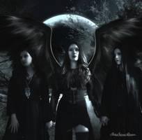Nocturne Coven