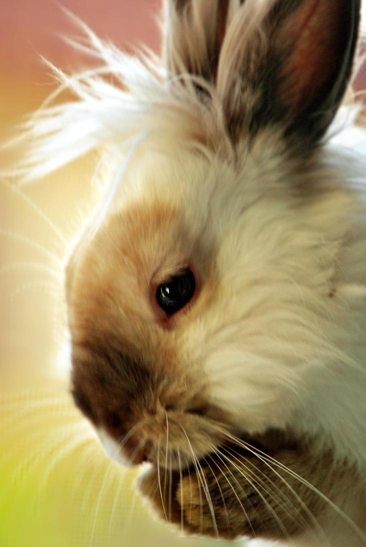 Rabbit. by Larkwar
