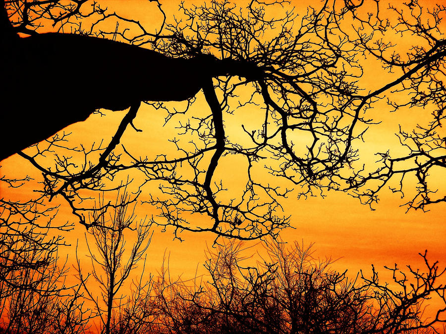 Fire Sky 1 by RoseSparrow