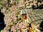 Ladybird by RoseSparrow