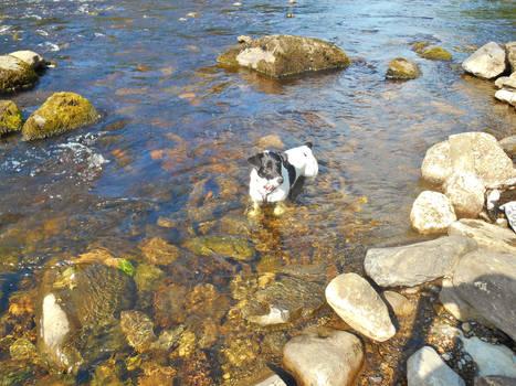 Snoop in the River Tees
