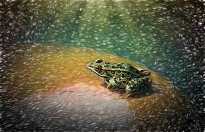 Frog  Morning