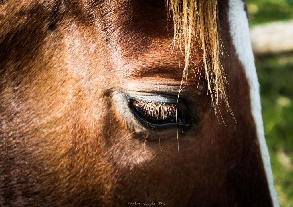 Close up shot of Horse (Storm) by 3PIVI