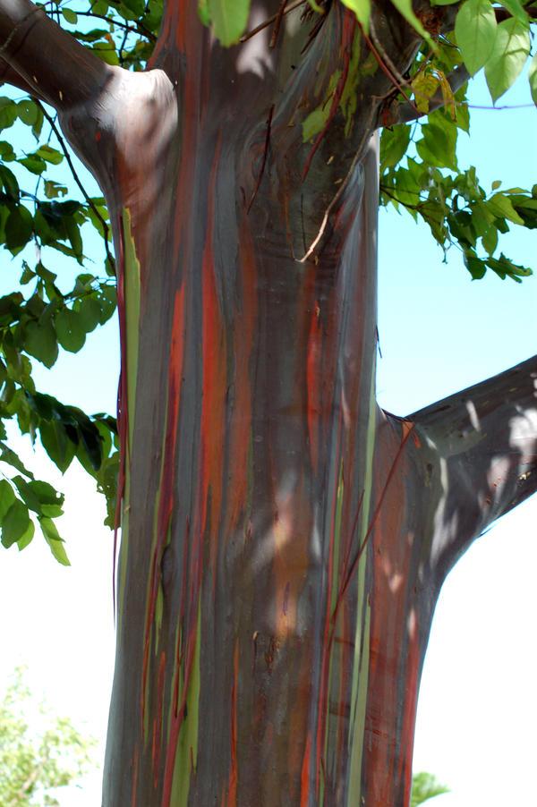 Watercolor Tree by Wolfs-Eye-Studios