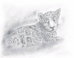 Leopard Cub by SubLeLumiere