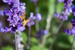 Sweet little Butterfly by imortalchaos