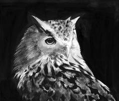 Owl by Miklche04