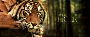 The Eye of the Tiger - Blend