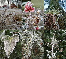 Collage of winter nature