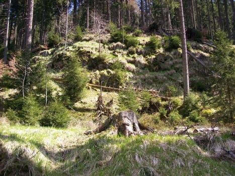 Woods 07