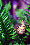 Snail - After the rain by Alabastra