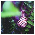 Over the rainbow - snail