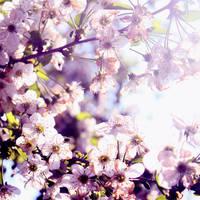 Spring by Alabastra