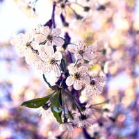 Spring flowers by Alabastra